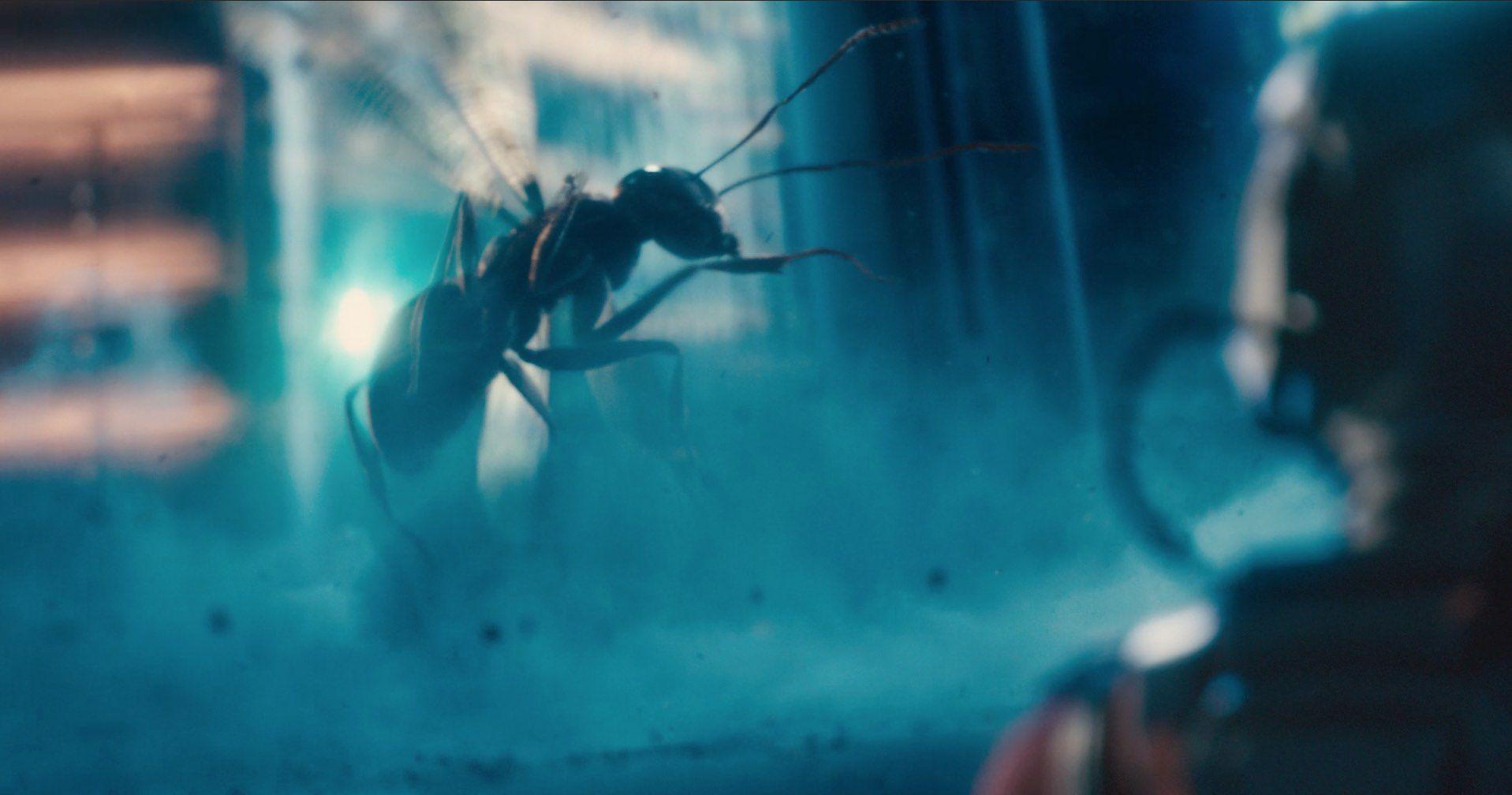 Imagen 12 de Ant-Man