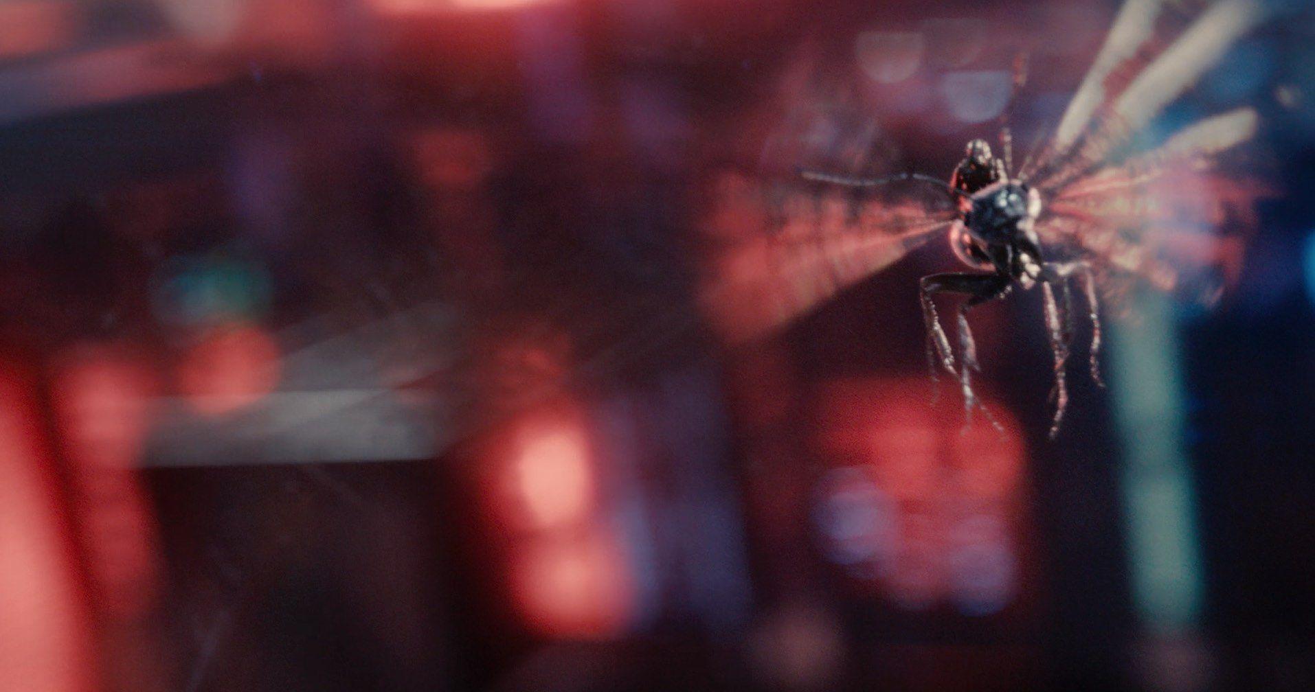 Imagen 5 de Ant-Man