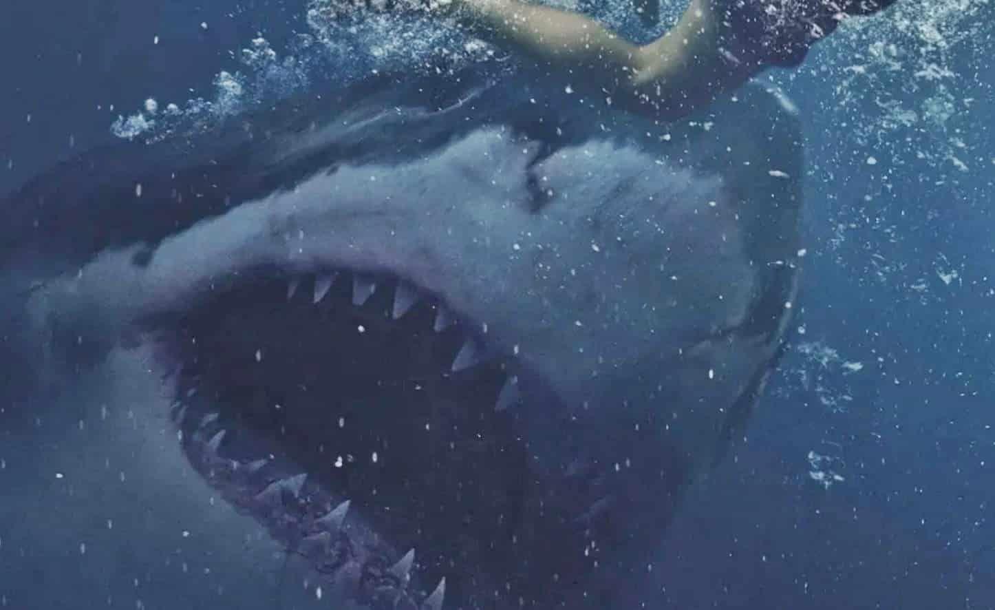 Imagen 2 de Tiburón Blanco