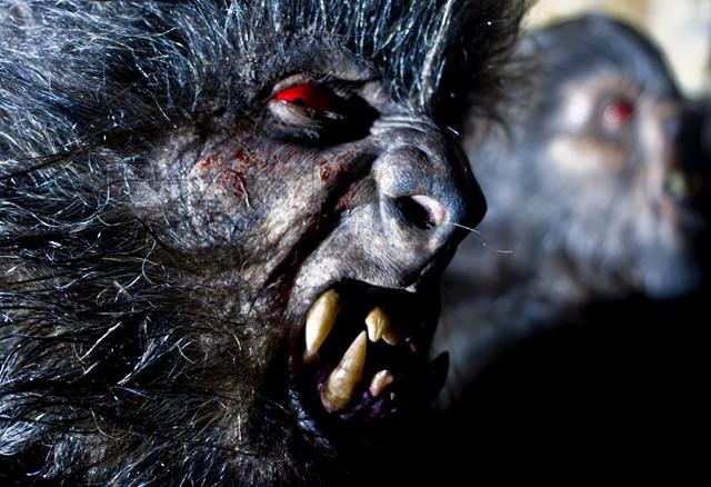 Imagen 10 de Lobos de Arga