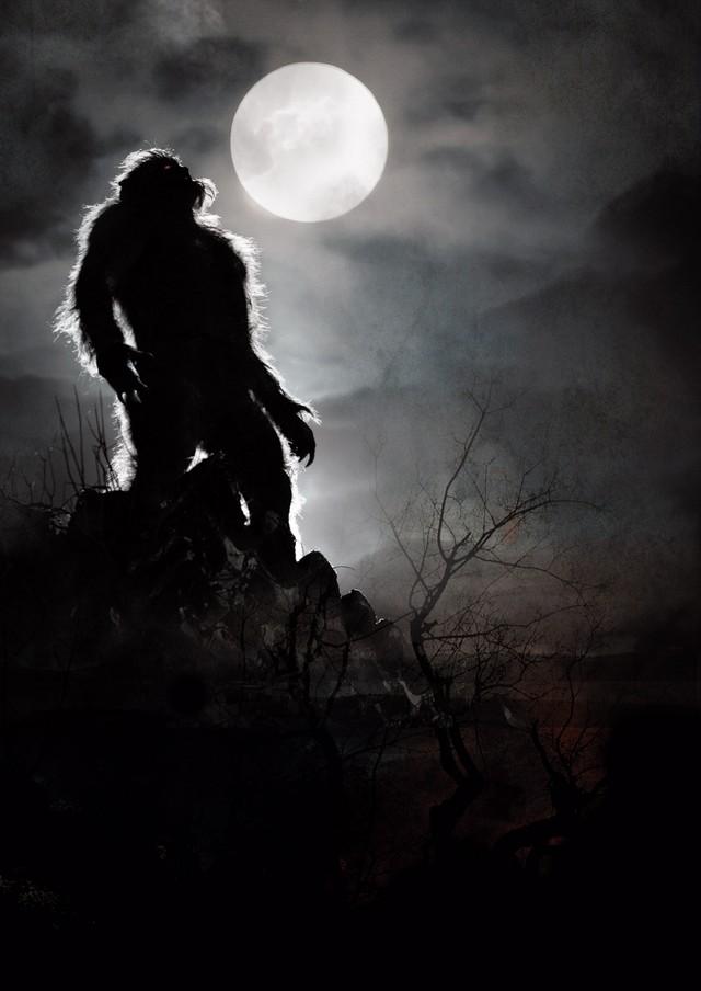 Imagen 16 de Lobos de Arga
