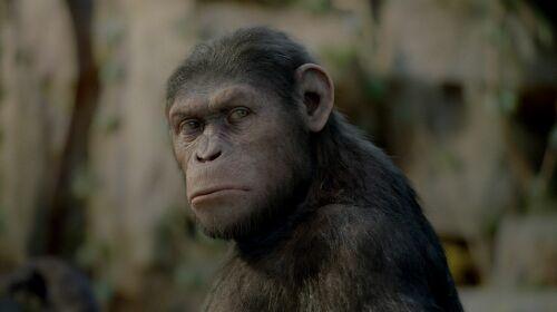 Imagen 2 de El Origen del Planeta de los Simios
