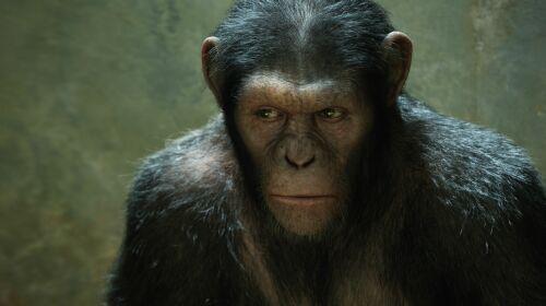 Imagen 3 de El Origen del Planeta de los Simios