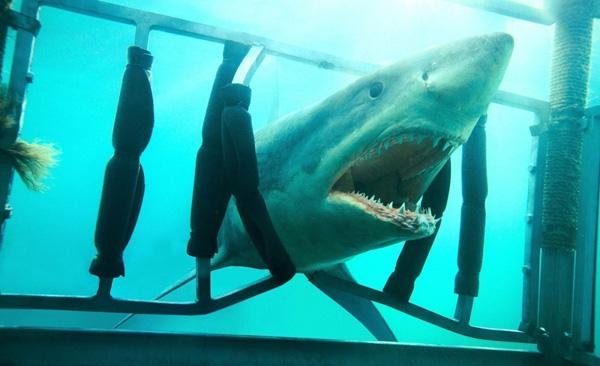 Imagen 14 de Tiburón 3D: La Presa