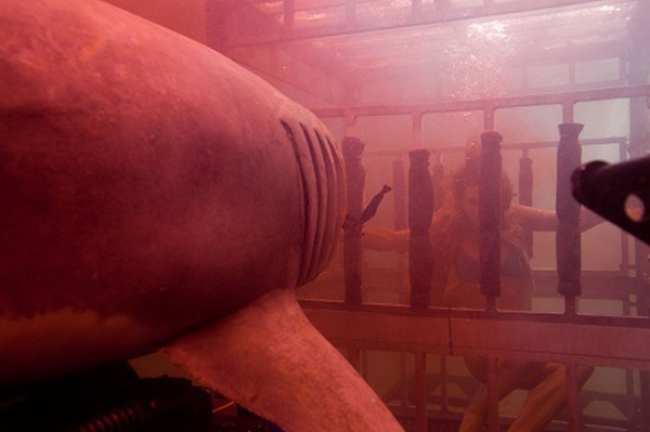 Imagen 3 de Tiburón 3D: La Presa