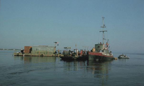 Imagen 12 de Tiburón