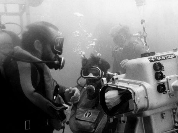 Imagen 19 de Tiburón