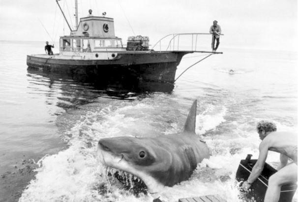 Imagen 2 de Tiburón