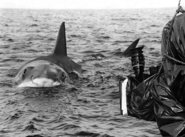 Imagen 7 de Tiburón